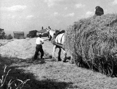 Two farmers haymaking with a horse and cart.